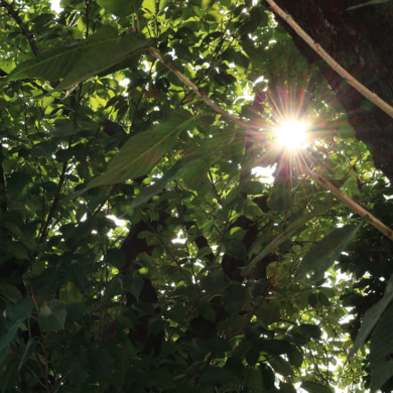 木漏れ日, Canon EOS KISS X7, Canon EF-S 24mm f/2.8 STM