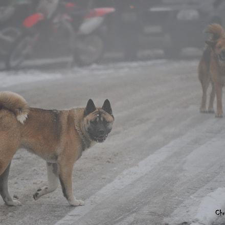 Hello Doggy !, Nikon D300S, Sigma 50-150mm F2.8 EX APO DC HSM II