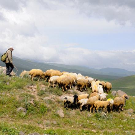 Lonely shepherd, Nikon D90, AF-S DX Nikkor 18-140mm f/3.5-5.6G ED VR