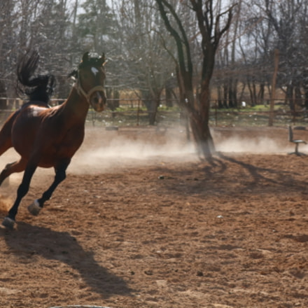 Running horse, Canon EOS 750D, Canon EF-S 18-55mm f/3.5-5.6 IS STM