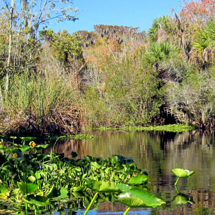 Canoeing with alligators, seagulls, Canon DIGITAL IXUS 95 IS