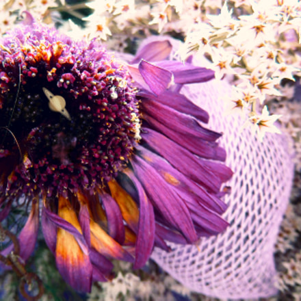 Cosmos flower., Canon POWERSHOT SX410 IS