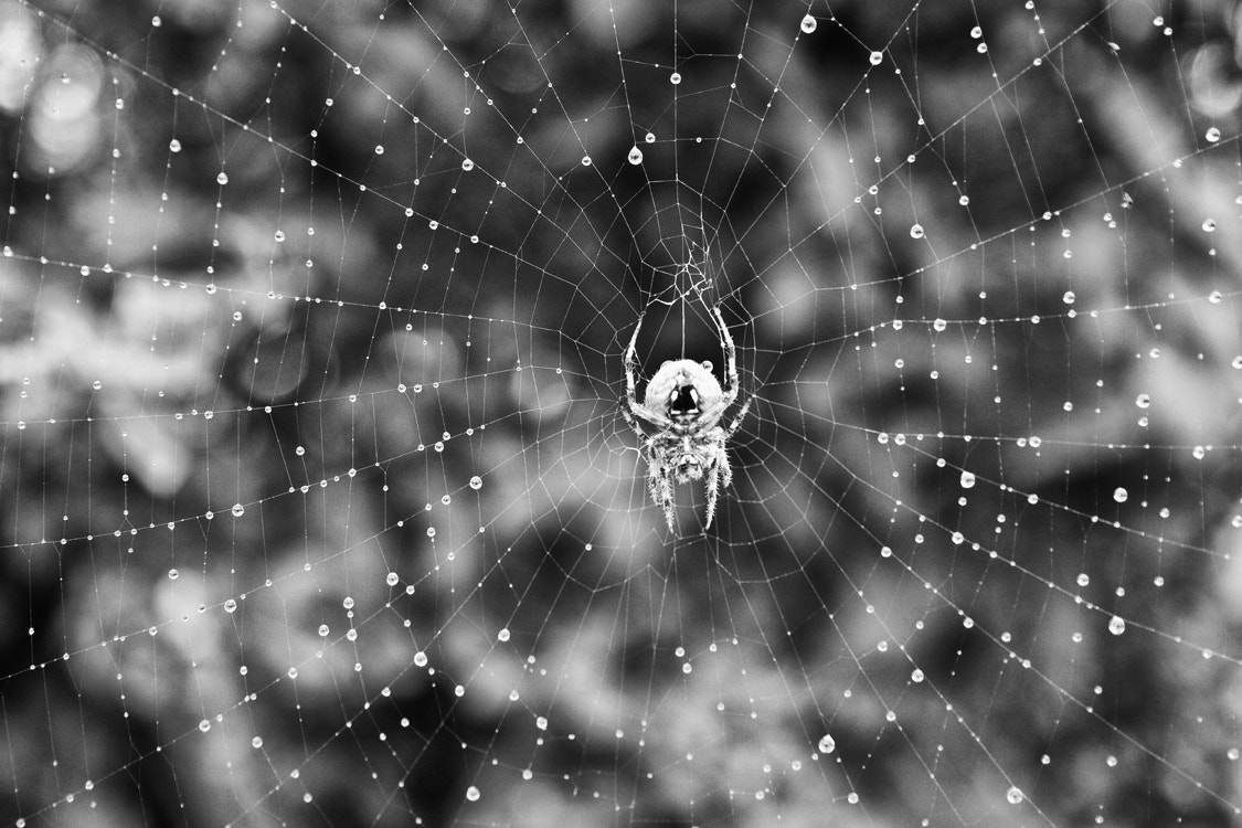 Photograph Spider by Tyler Ross on 500px
