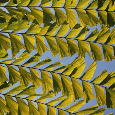 Green Canopy, Nikon D80, Tamron AF 28-300mm f/3.5-6.3 XR LD Aspherical (IF) (185D)
