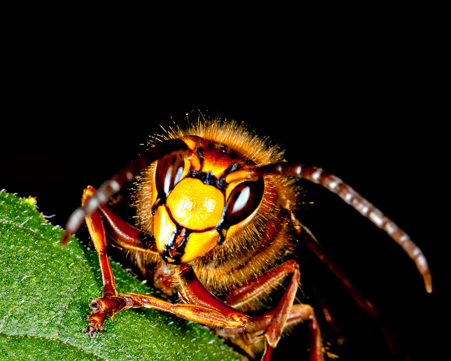 Photograph Buzz Off! by Kelly & Robert Walters on 500px