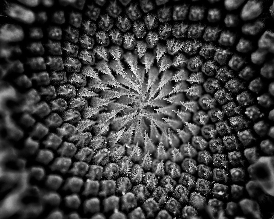 Photograph Sunflower's Inner Sanctum by Kelly & Robert Walters on 500px