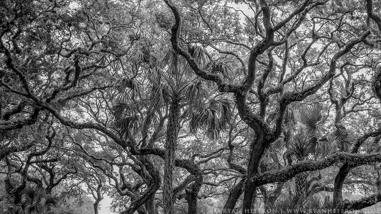 Photograph Veins by Ryan Heffron on 500px
