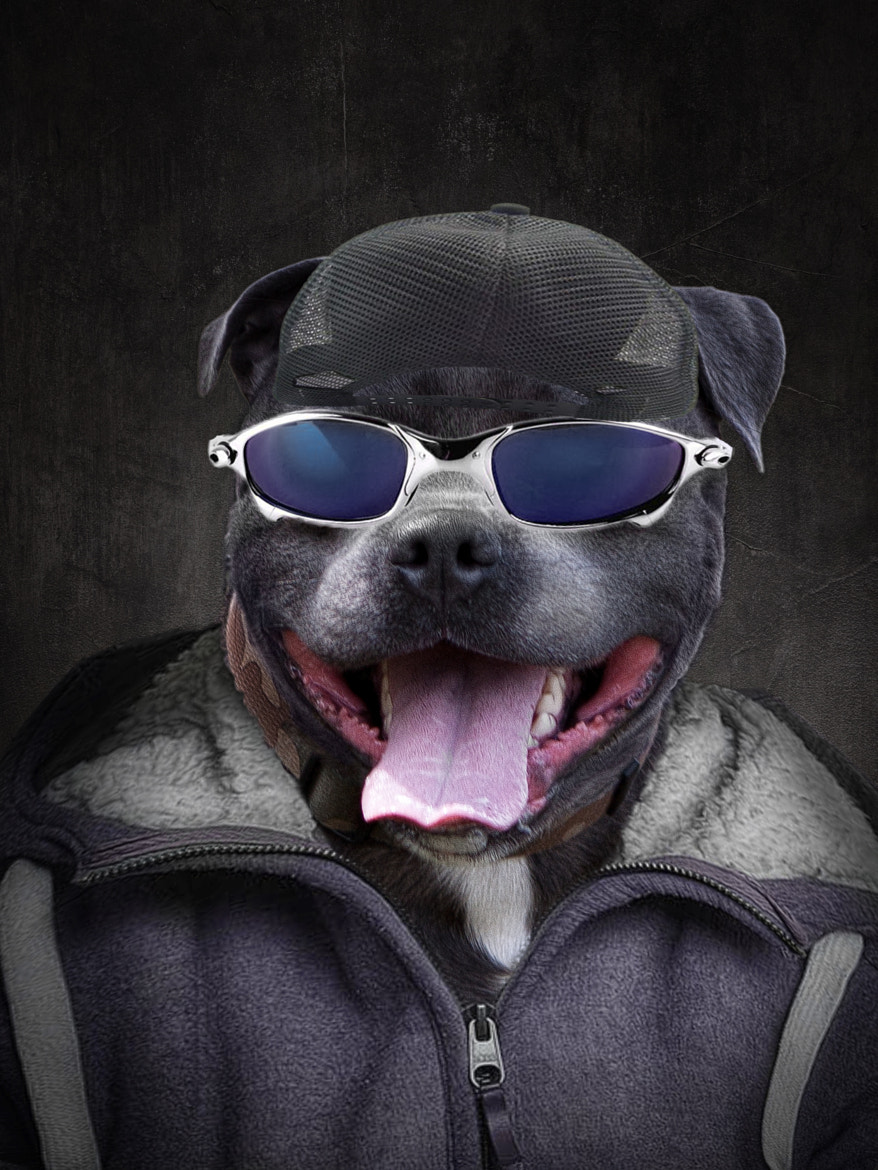 Photograph The coolest dog ever! by antony lampitt on 500px