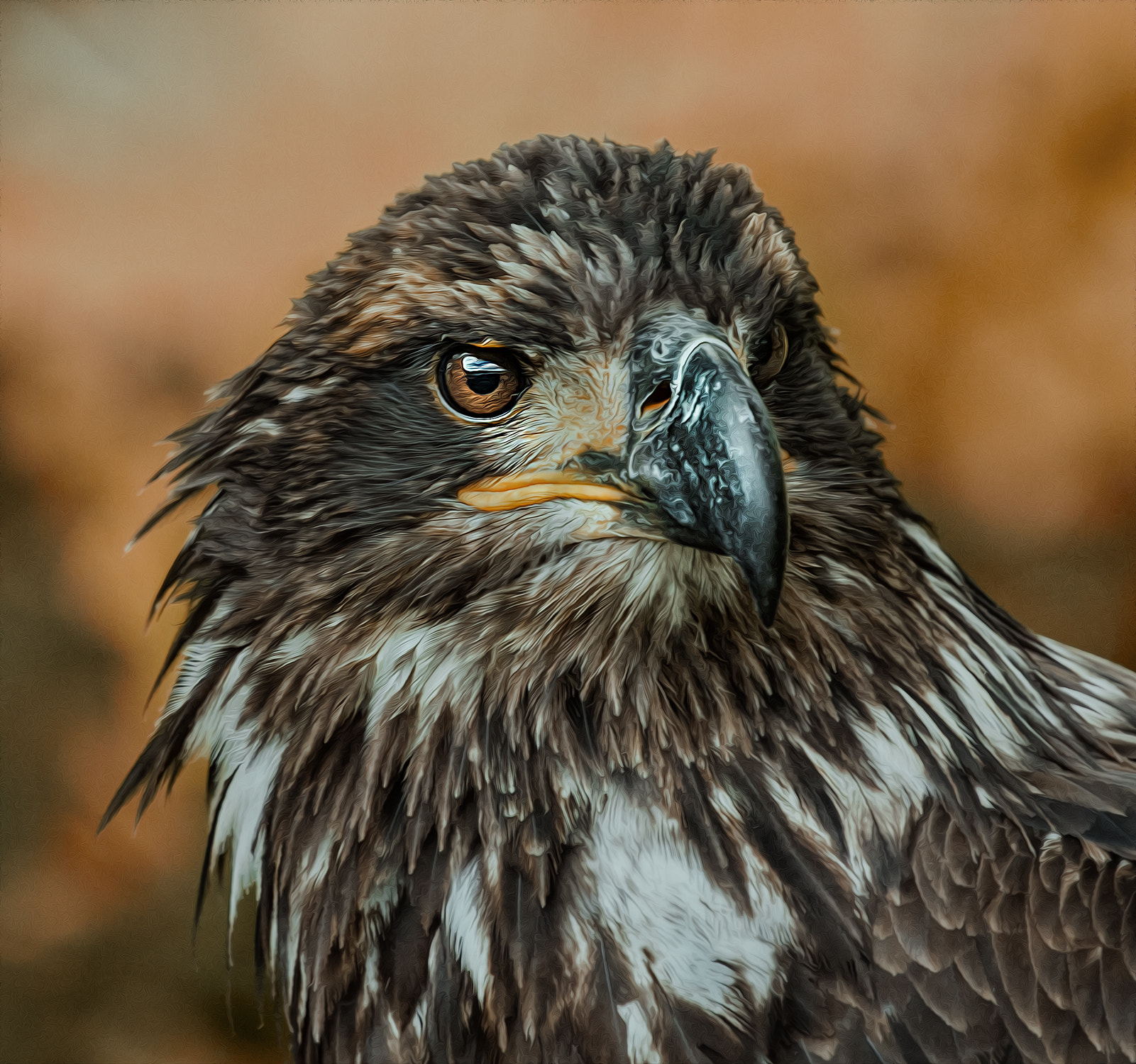 Photograph raptor by Detlef Knapp on 500px