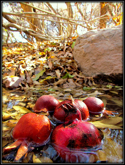 Photograph Pomegranates by Ali Ebrahimi ( علی ابراهیمی ) on 500px