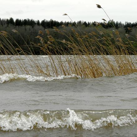 Шторм на реке Неве.