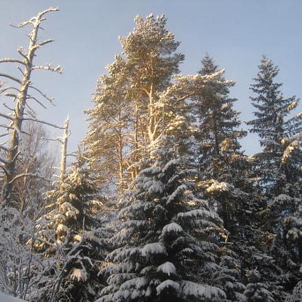 Winter sun, Canon DIGITAL IXUS 80 IS