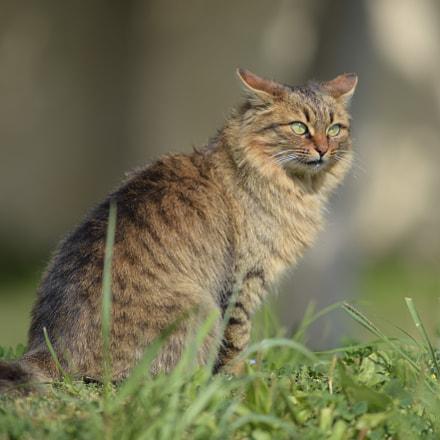 cat2, Nikon D750