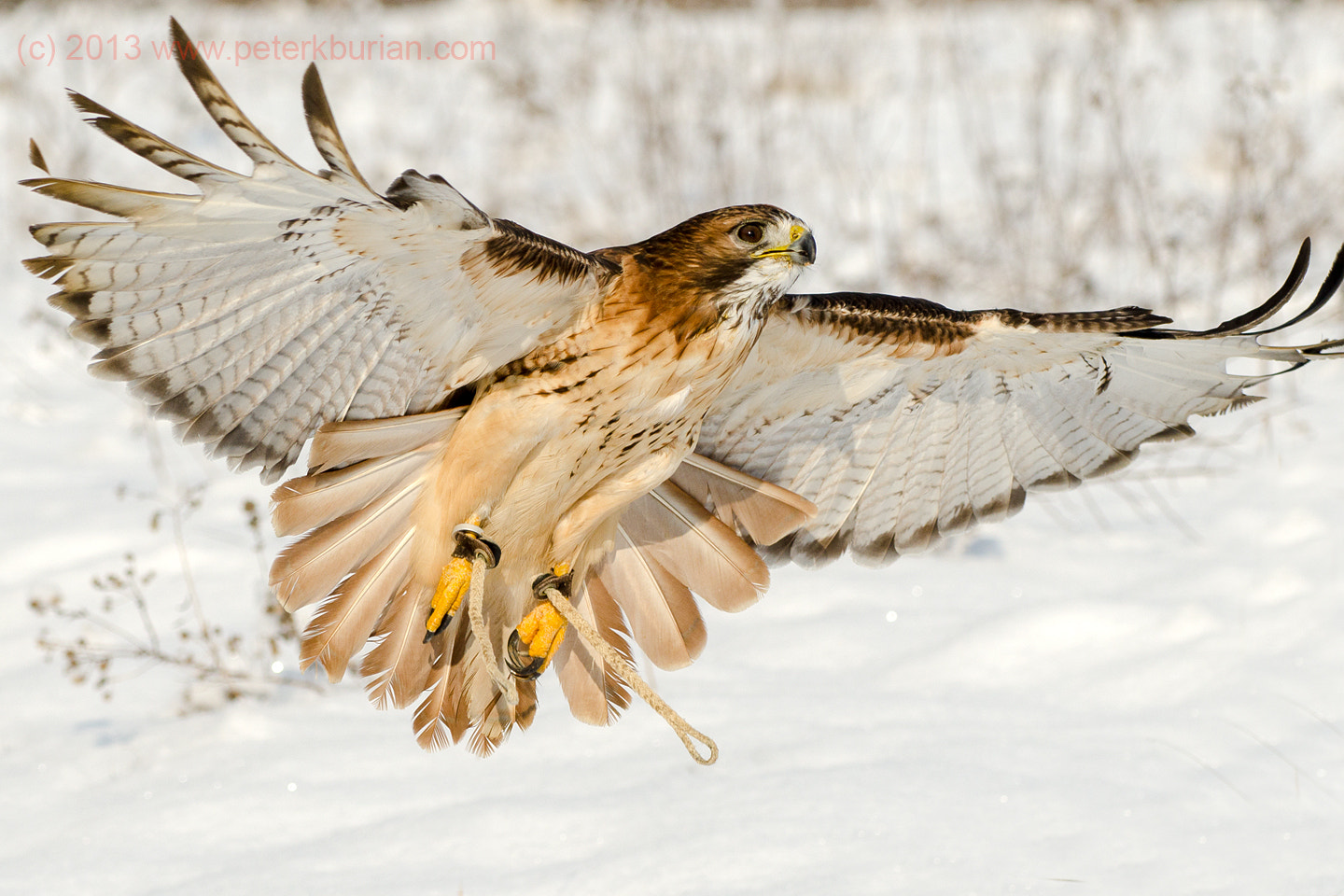 Photograph Ready to Land by Peter K Burian on 500px