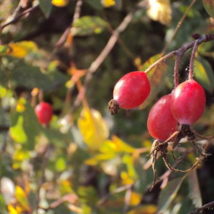 Плоды розы, Sony DSC-W190
