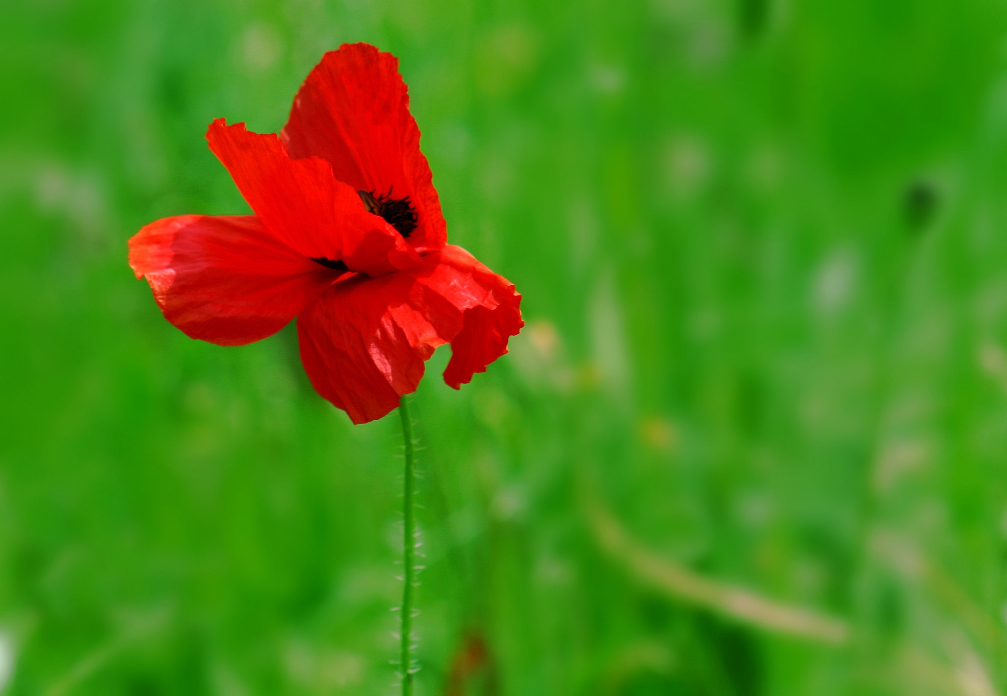 Photograph Poppy by Sandrine Fernandes on 500px