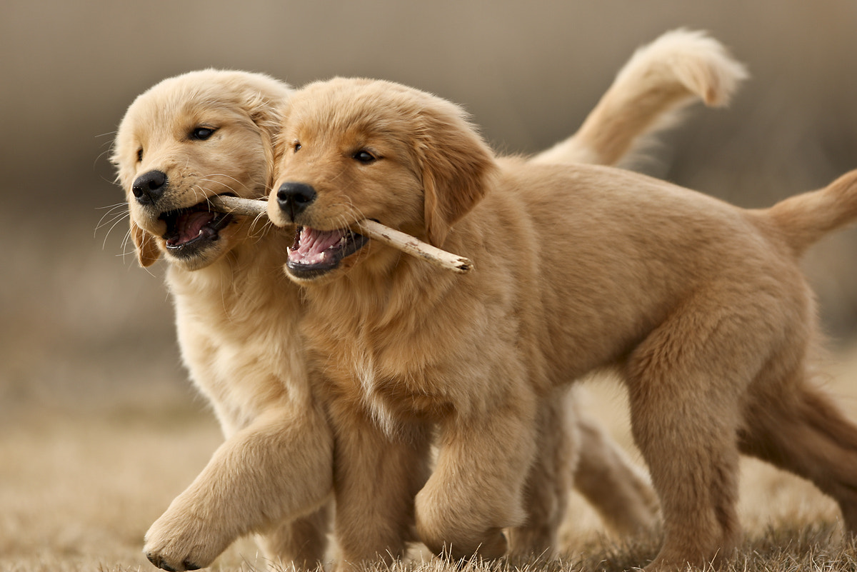 Photograph Puppy Sisters by Brian Whipple on 500px