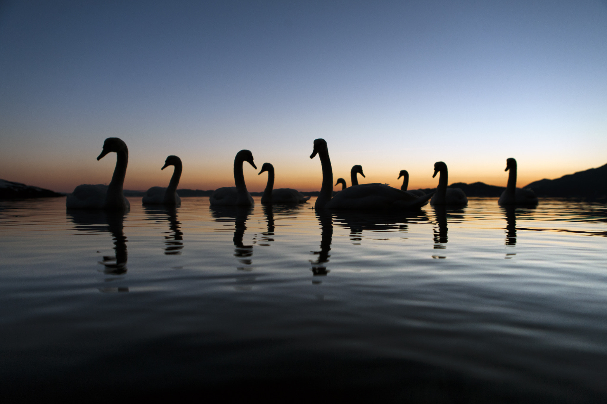 Photograph Swanlake by Eivind Hagerup on 500px