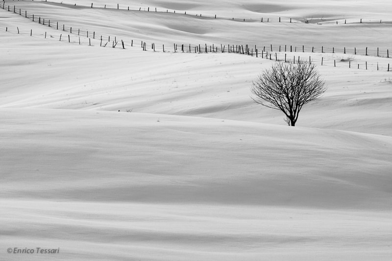 Photograph Snow and tree by Enrico Tessari on 500px