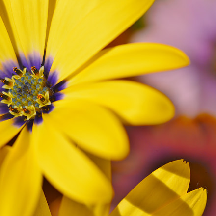 Macro nature......Spring lowers, Nikon D3200, AF Micro-Nikkor 55mm f/2.8
