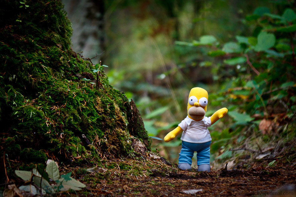 Photograph Homer at Camano's forest trail by Ilia Chernikov on 500px