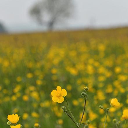Yellow, Nikon D3200, AF-S DX Zoom-Nikkor 55-200mm f/4-5.6G ED