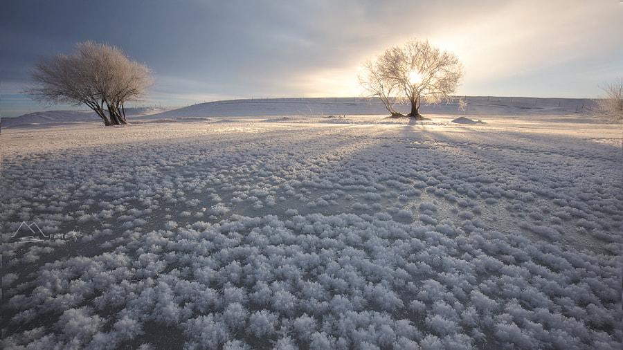 《冰花盛开的日子》, автор — 雪狼  на 500px.com