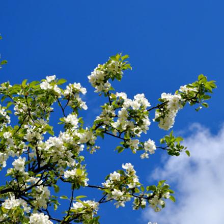 весна, Nikon D3200, AF-S DX Nikkor 18-55mm f/3.5-5.6G VR II