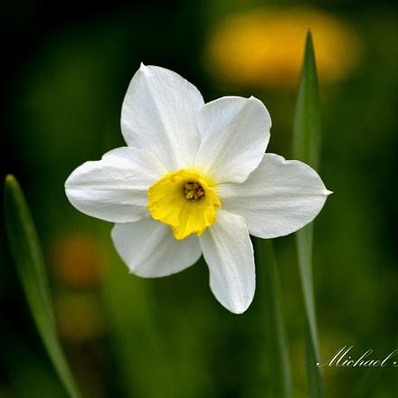 цветок, Nikon D3200, Sigma 70-300mm F4-5.6 APO DG Macro HSM