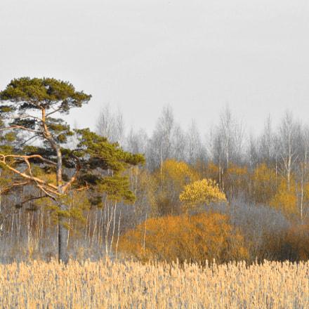 дерево, Nikon D3200, Sigma 70-300mm F4-5.6 APO DG Macro HSM