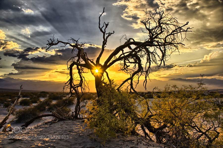 Photograph Mesquite flat sunset by Tom  Baetsen on 500px
