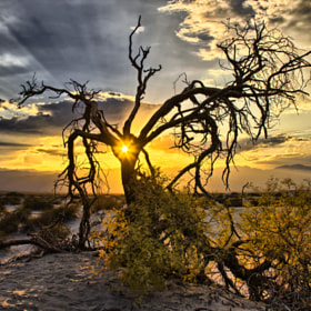 Mesquite flat sunset by Tom  Baetsen (xlix)) on 500px.com