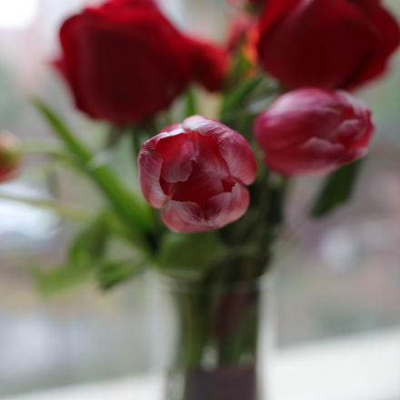 Blossom, Canon EOS 5D MARK IV
