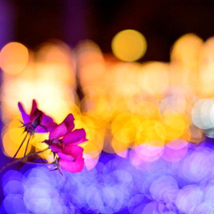 bublly flower, Nikon DF, AF-S Nikkor 58mm f/1.4G