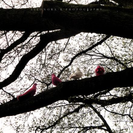 Doves., Sony DSC-W270