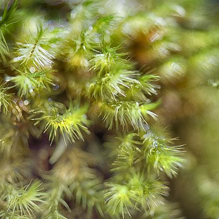 Mousse et lichen – piton de la fournaise