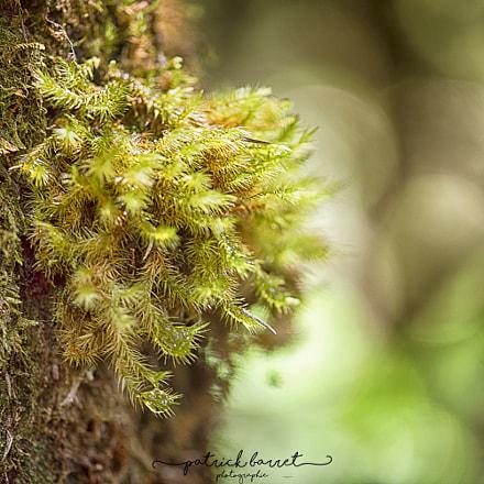 Mousses et Lichens – Piton de la fournaise