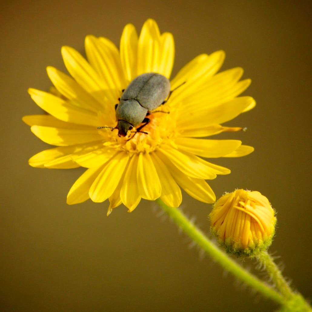 Photograph Tiny by Michelle Sypult on 500px