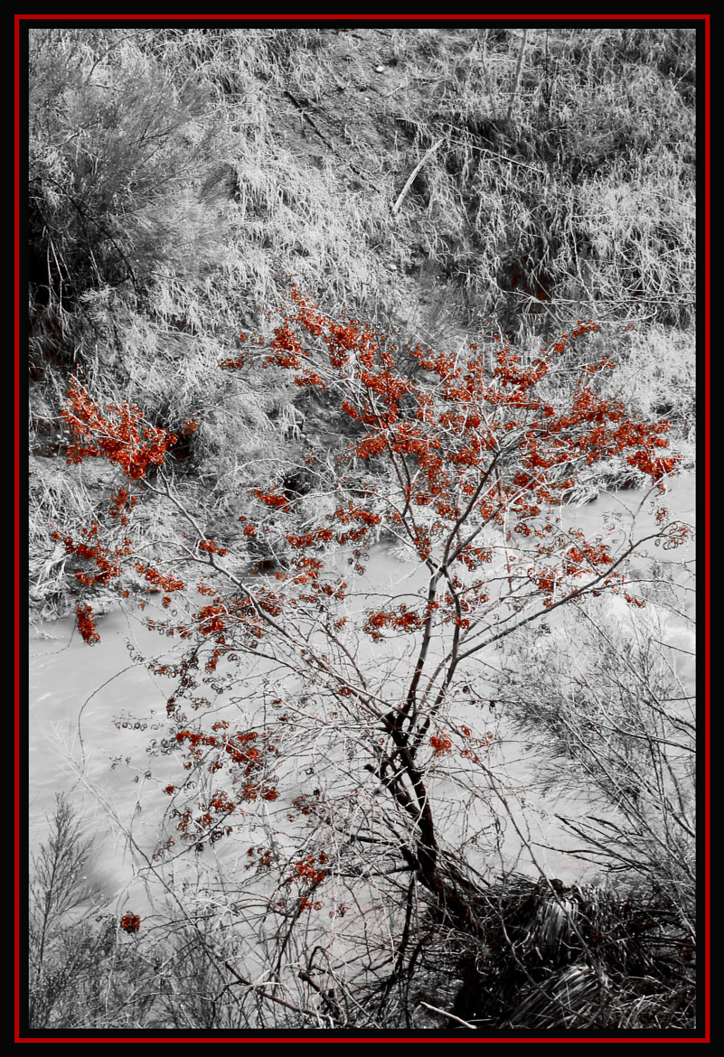 Photograph Leaves of Red by Jeremiah  Policky on 500px
