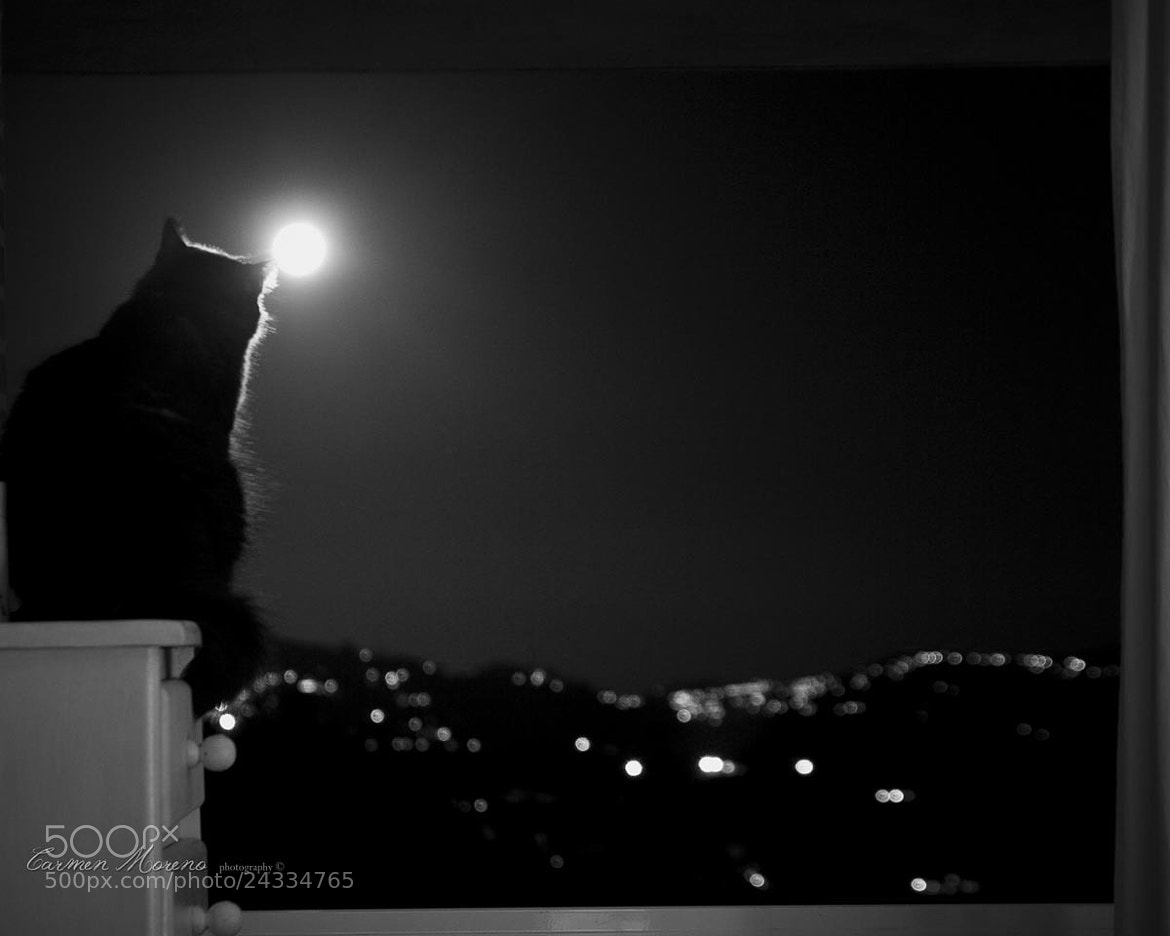 Photograph Th Cat and the Full moon. by Carmen Moreno on 500px