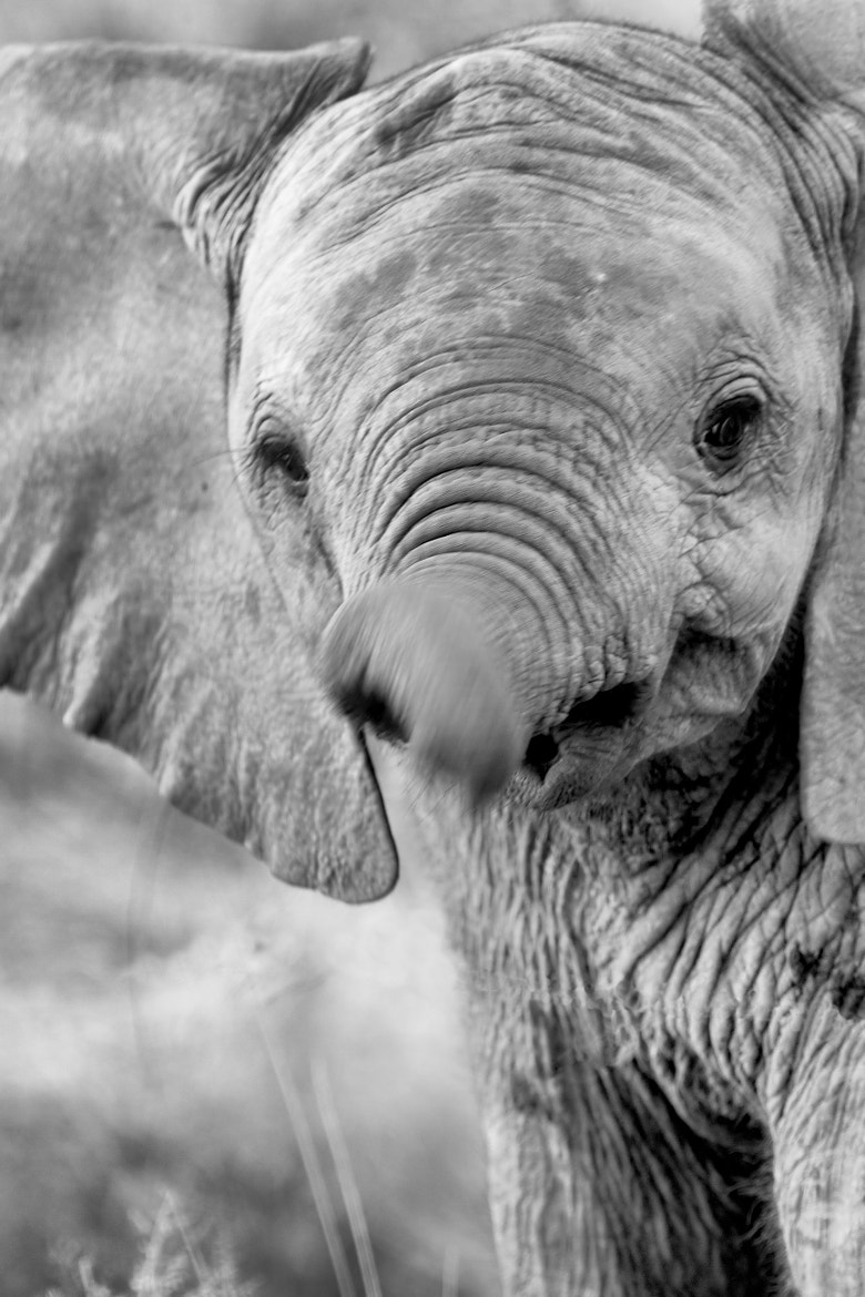 Photograph Out Of Control Trunk by Michael Moss on 500px