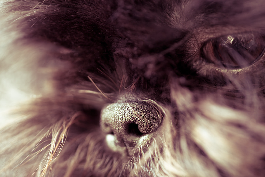 Photograph Nose by Steve Bullock on 500px