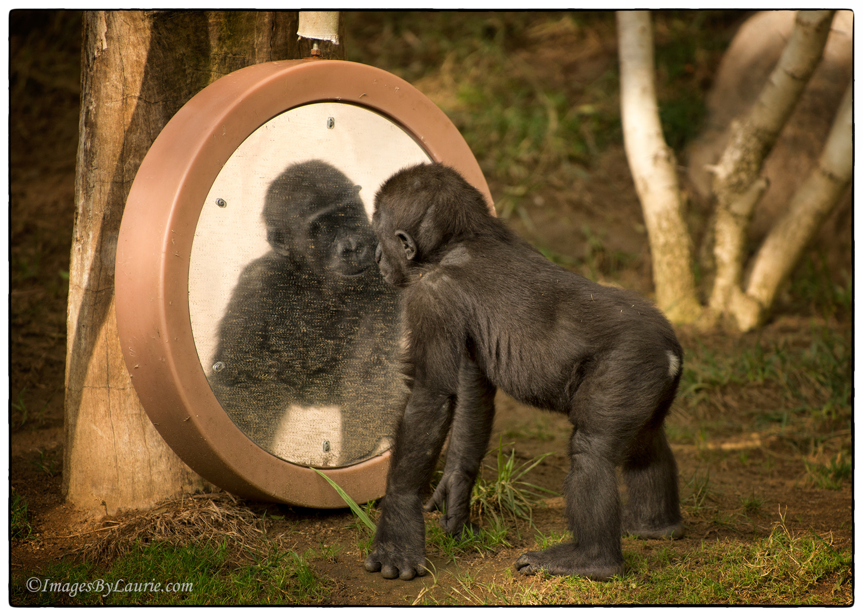 Photograph Mirror, Mirror... by Laurie Rubin on 500px
