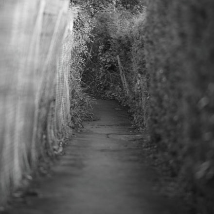 Path to church, Canon EOS-1D X MARK II, Canon EF 200mm f/2L IS