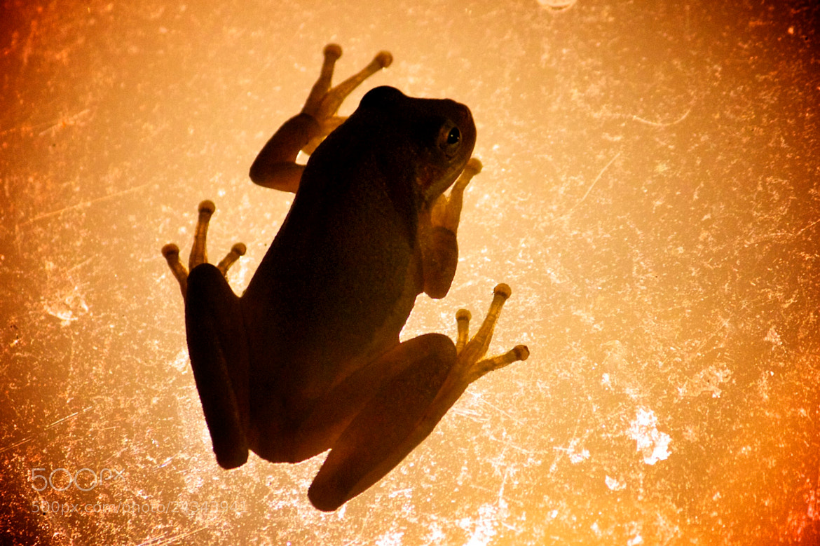 Photograph Frog's Night Light by Michelle Sypult on 500px