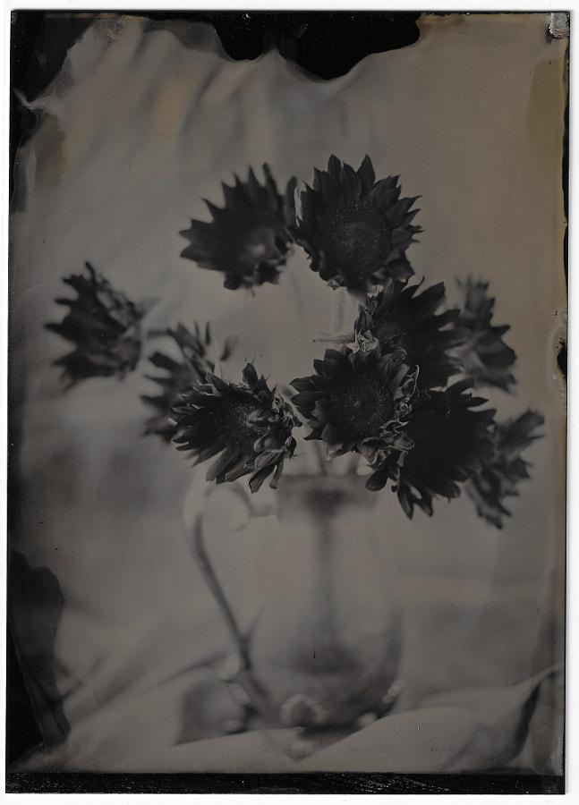 Sunflowers 1.21.18