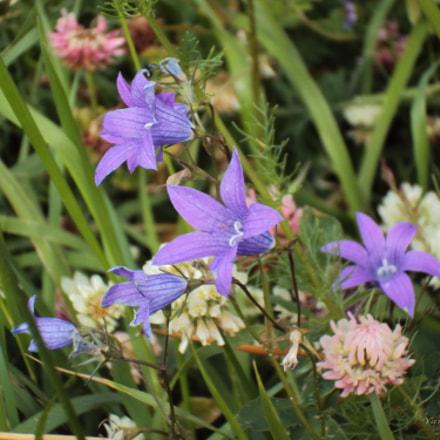Wild flowers, Sony DSC-W190