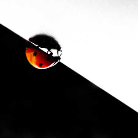 bug, Nikon COOLPIX S630