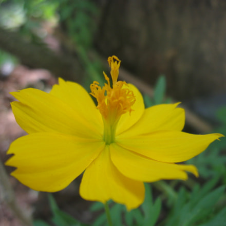 Yellow flower, Canon POWERSHOT A580