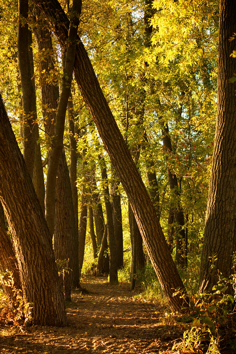 Photograph Autumn Trail by Michelle Sypult on 500px
